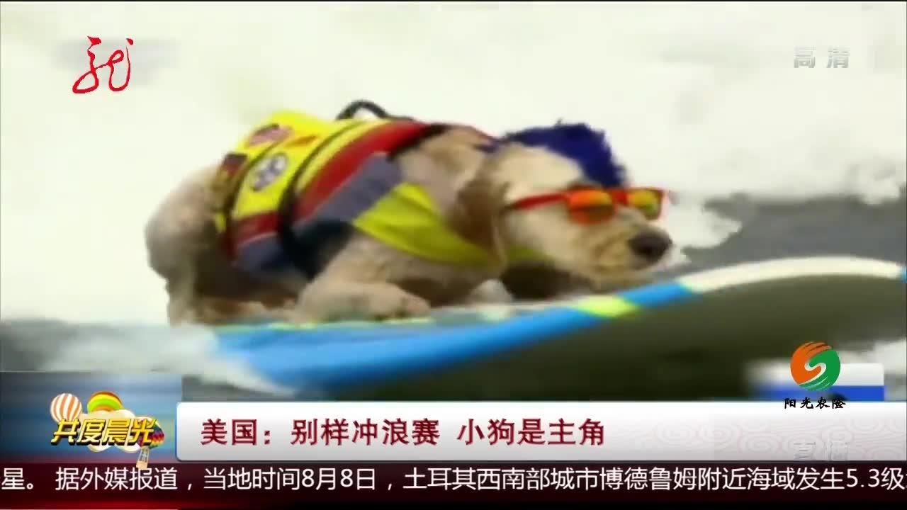 美国:别样冲浪赛 小狗是主角