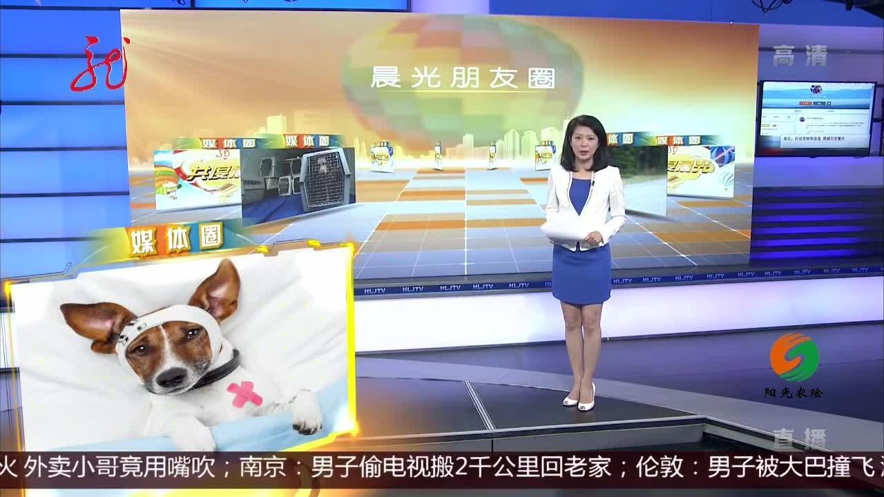湖北:托运宠物狗逃逸 围捕后受重伤