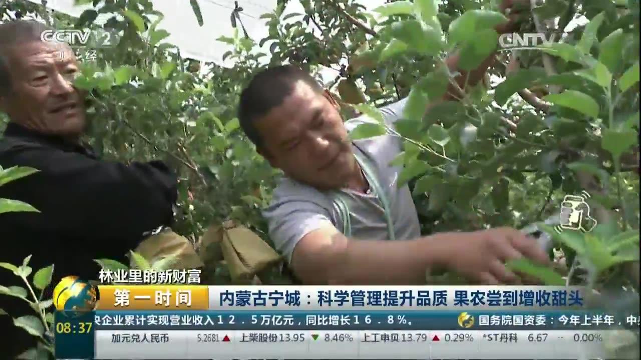 林业里的新财富 内蒙古宁城:科学管理提升品质 果农尝到增收甜头